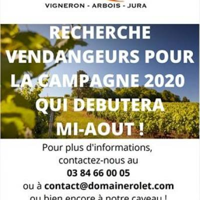 Annonce vigneron rolet 20200621