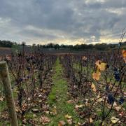 Bourgogne mercurey