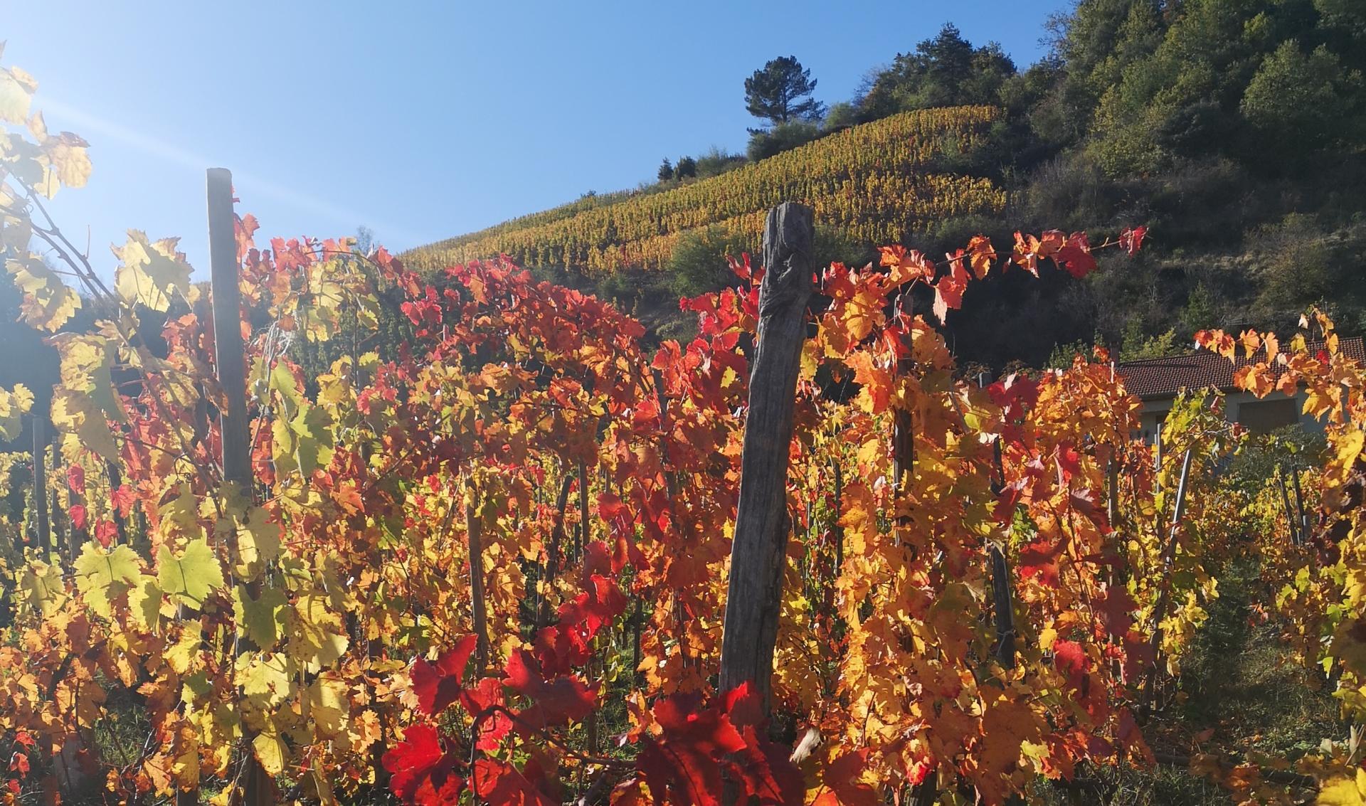 Vin Convivialité, site de vente en ligne et blog sur le vin